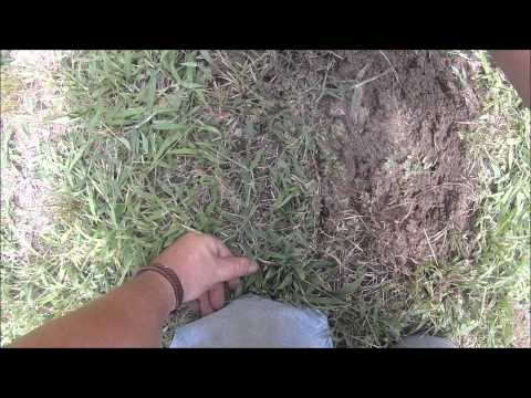 My first metal detecting video