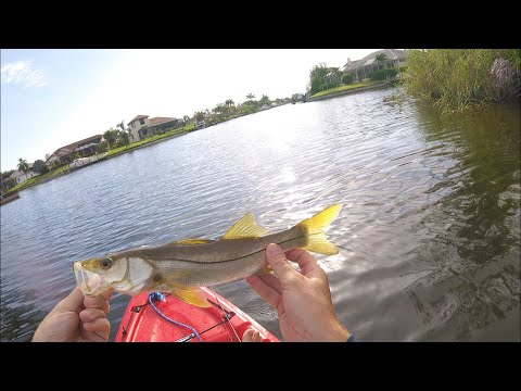 Cape Coral Multi Species Canal Fishing