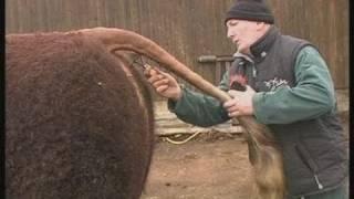 Patrick Malacan, éleveur de taureaux (Cantal)