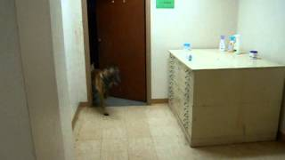 Little Rock K-9 Academy's - K9 Building Search Introduction