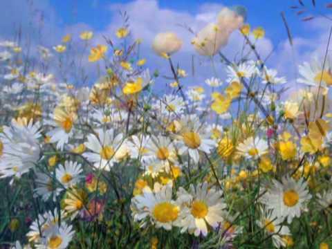 ♫ ♥♫ Spring Time ----Yiruma ♫ ♥♫