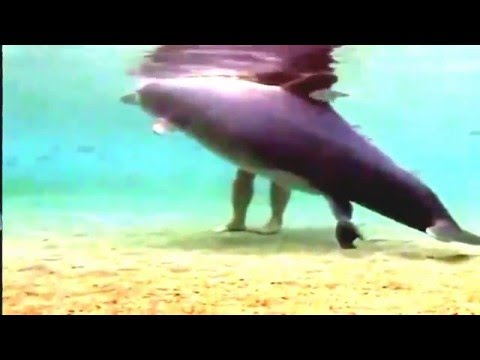 DOLPHIN MATTING AND REPRODUCTIVE SYSTEM FULL VIDEO