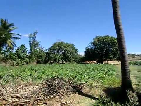 20acres Farm Land For Sale in Tirunelveli District