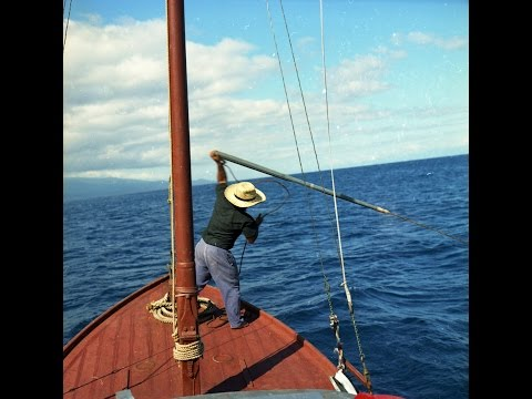 Whaling in the Azores 1966