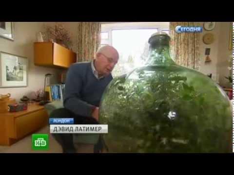 Слововед. Растение на букву «Г» смотреть онлайн в HD качестве