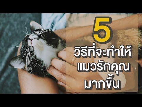 EP11 : 5 วิธีที่จะทำให้แมวรักคุณมากขึ้น+!!