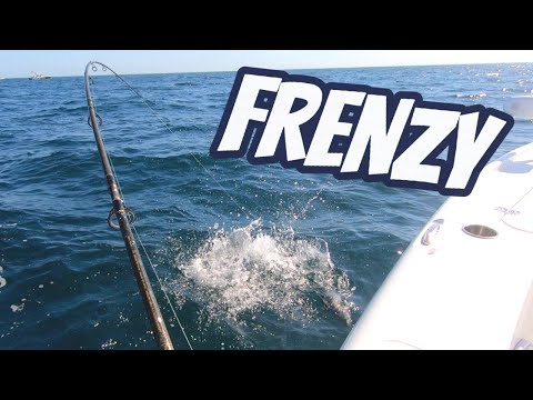 Feeding FRENZY Live Chumming Offshore Fishing Tampa Bay