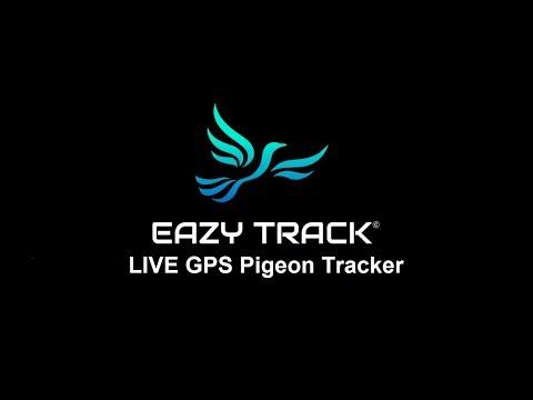 EasyTrack homing racing pigeon live GPS tracker