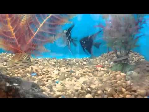 Petsmart fish youtube for Petsmart live fish