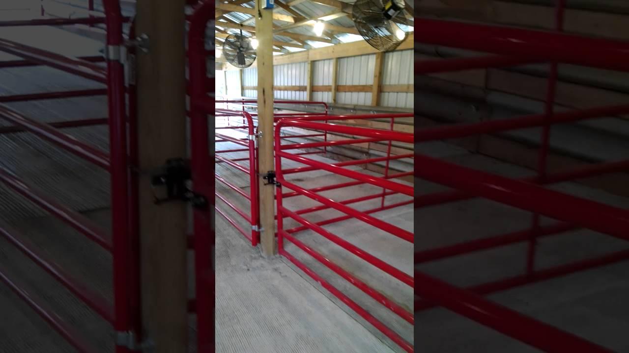 seitz cattle show barn youtubeseitz cattle show barn