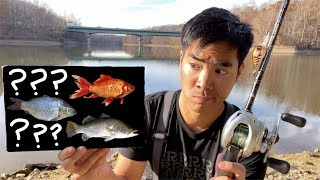 MYSTERY FISH CHALLENGE at a HUGE Reservoir Shore Only