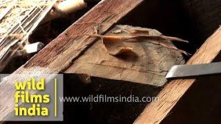 Boat makers make wooden boats, Kerala
