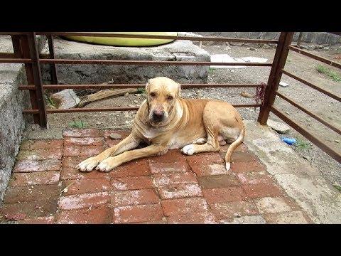 जगताप डॉग केनेल इंदापूर पुणे डेमो Jagtap Dog Kennel At Indapur Pune Promo