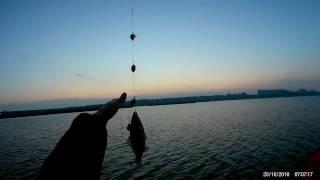 Утренний Карась | river fishing