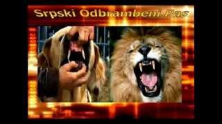 Top Guard Dogs / Aggressive Dogs