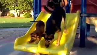 Смешные видео про собак  107