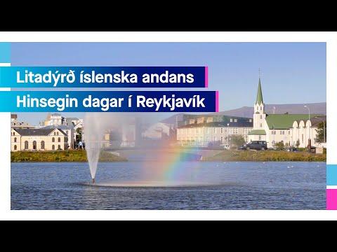 Hinsegin dagar 2021 | Icelandair
