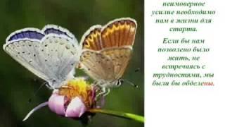 Урок бабочки. Как добиться Успеха!