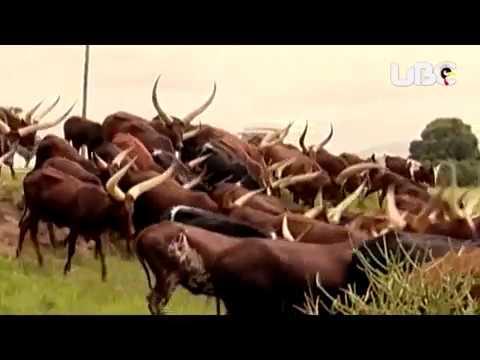 community tourism Uganda