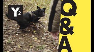 Q&A I Zoophilie - Sex mit Tieren I Y-Kollektiv