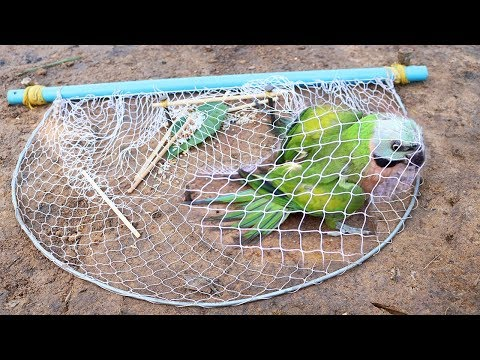Creative Easy Bird Trap - Build Technology Bird Trap Make From Blue Pipe With Net