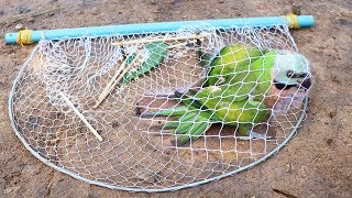 Download Creative Easy Bird Trap - Build Technology Bird Trap Make From Blue Pipe With Net