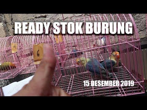 Ready Atok Burung Lovebird Murah 15.Desember.2019