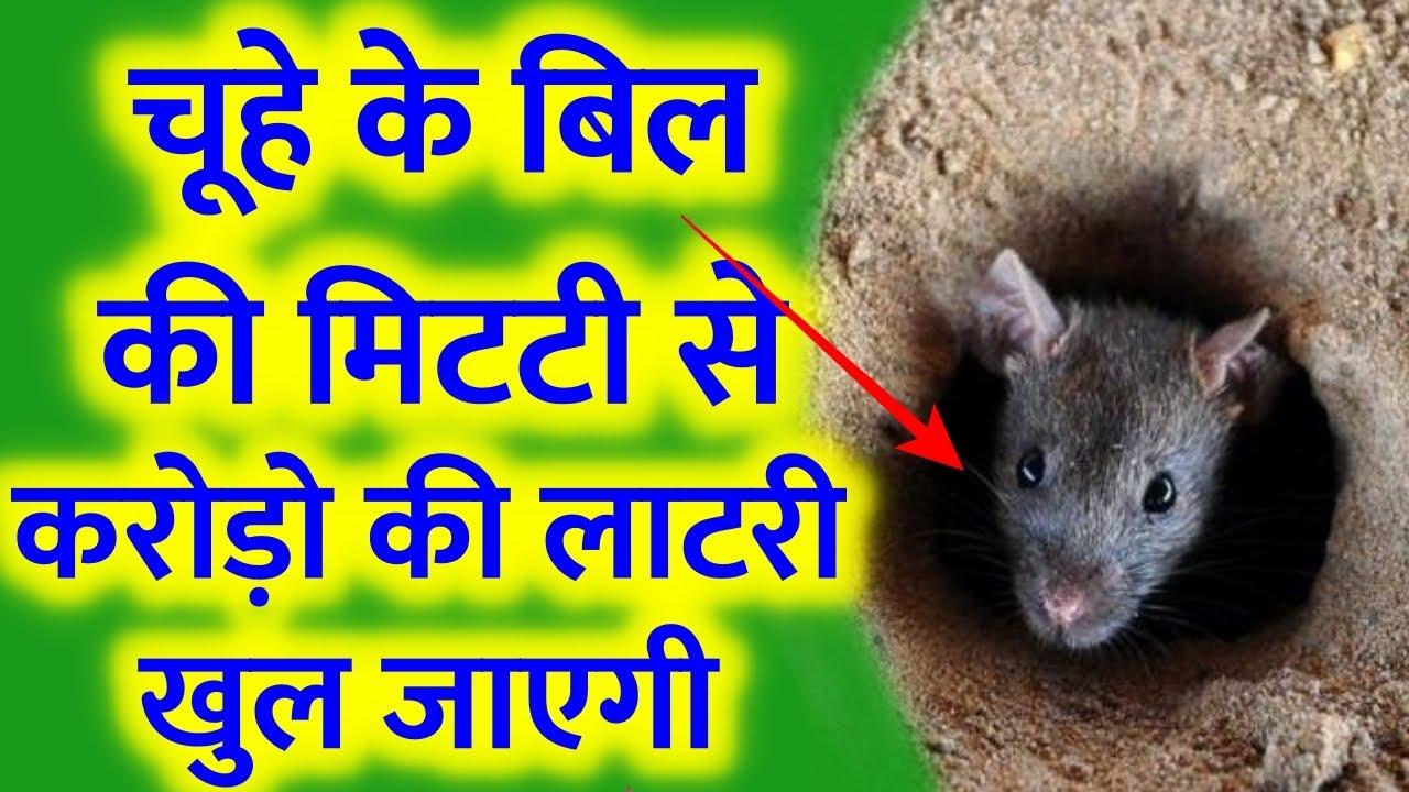 मालामाल बना देगा चूहे की बिल की मिट्टी घर राजा की तरह पैसो से भर जाएगा | Shiv Puran