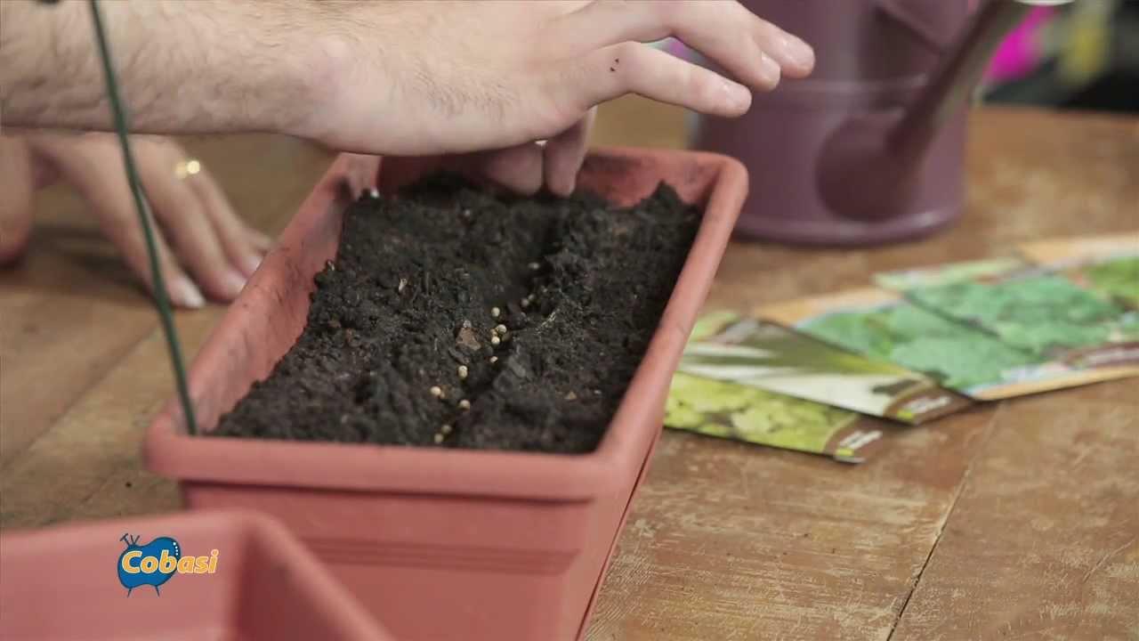 Dicas para montar uma mini horta em casa youtube for Modelos de mini apartamentos