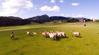 Rencontre : les animaux sauvages du parc des Monts d'Azur