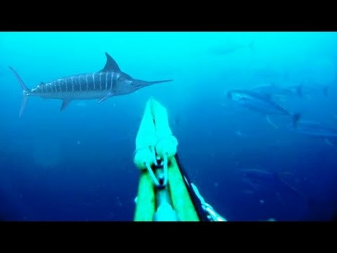 Blue Water Spearfishing Pesca Sub with Diego Santiago - Brasil Spearfishing Champion