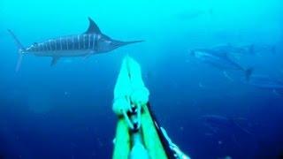Blue Water Spearfishing Pesca Sub with Diego Santiago - Brasil Spearfishing Champion