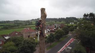 Tree surgery in East Devon - Ace Arboriculture Ltd