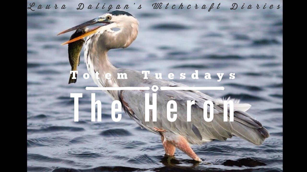 Totem Tuesday The Heron Youtube