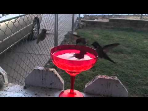 Hummingbirds Refueling Before Dark