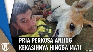 Pria 52 Tahun Perkosa Anjing hingga Mati karena Pacarnya Tak Pulang