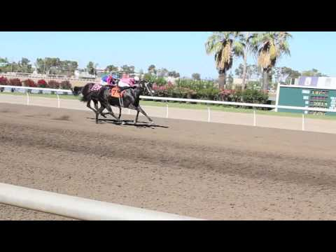 California State Fair Governor's Cup Live Horse Race