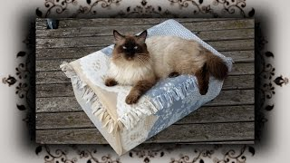Diy 😻 Outdoor Knoten Bett Für Katzen | No Sew Cat Bed Cat