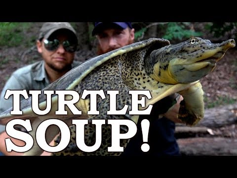 Catch and Cook {Clean} SOFTSHELL TURTLE! Ep07 | 100% WILD Food SURVIVAL Challenge!