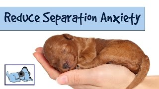 Repeat youtube video Music to Reduce Separation Anxiety in Dogs: Relaxing Sounds, Stressed Dog, Sounds for Puppies