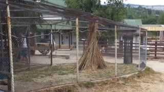 Zoo Parc Moara de vânt