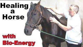 Healing a Horse
