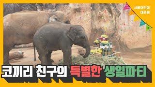 코끼리 친구의 특별한 생일파티썸네일