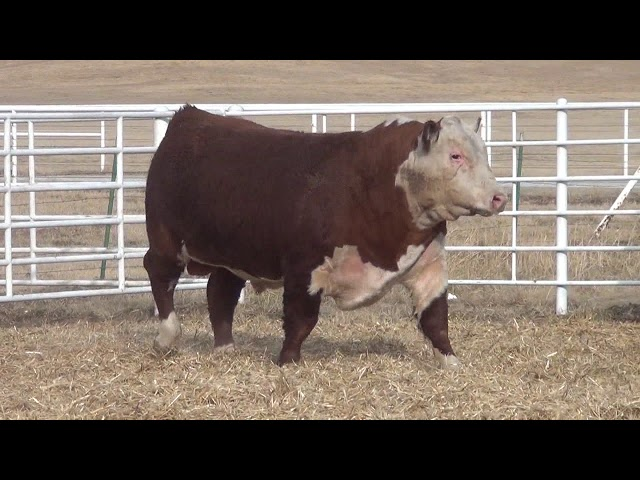 Express Ranches Lot 216