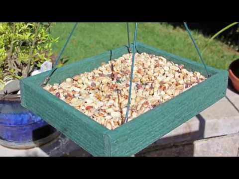 How To Pick The Best Bird Seed For Your Backyard Birds
