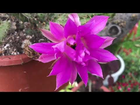 La gran Colección de Cactus de mi amiga