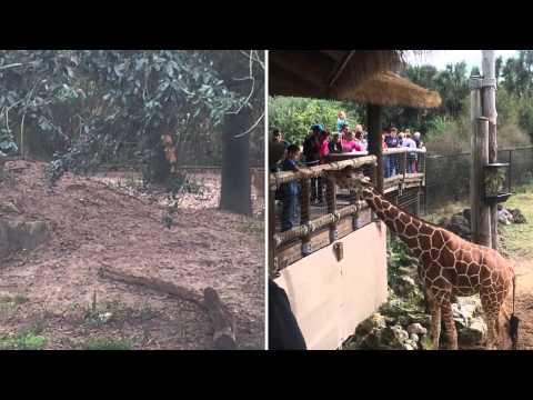 Jacksonville zoo adventures