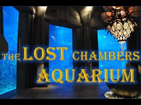 The Lost Chambers of Aquarium – Atlantis – Dubai Tour