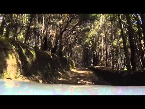 Drive to Kamakou Nature Preserve Molokai