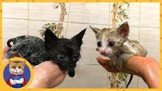 Купаем и лечим спасенных котят